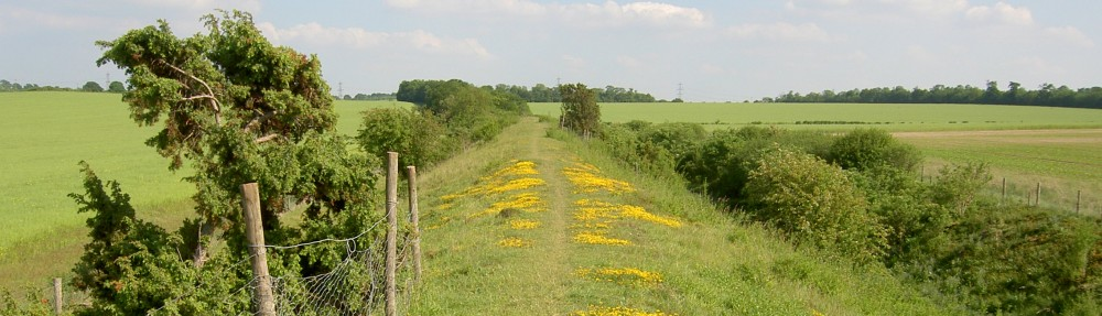 Friends of the Roman Road and Fleam Dyke